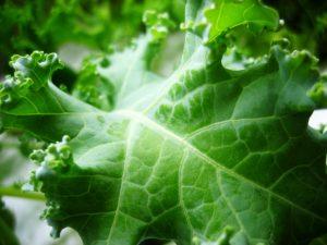 domowa szklarnia hydroponiczna green farm