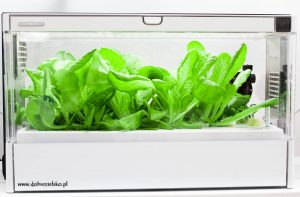 szklarnia hydroponiczna green famr