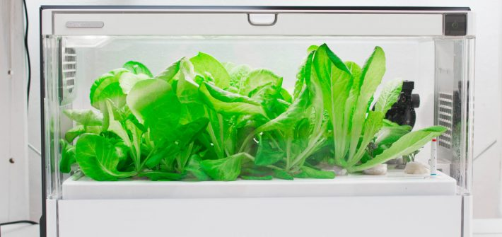 szklarnia hydroponiczna green farm