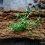 Wegański pasztet soczewicowy z grzybami leśnymi