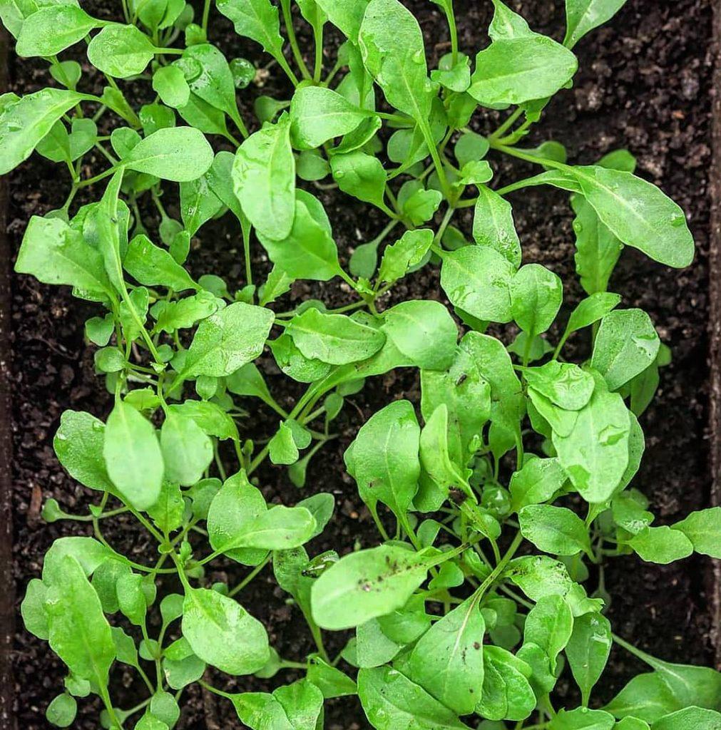 ogródek na balkonie warzywa zioła domowa uprawa